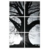 Sisustustaulu Mustavalko puu